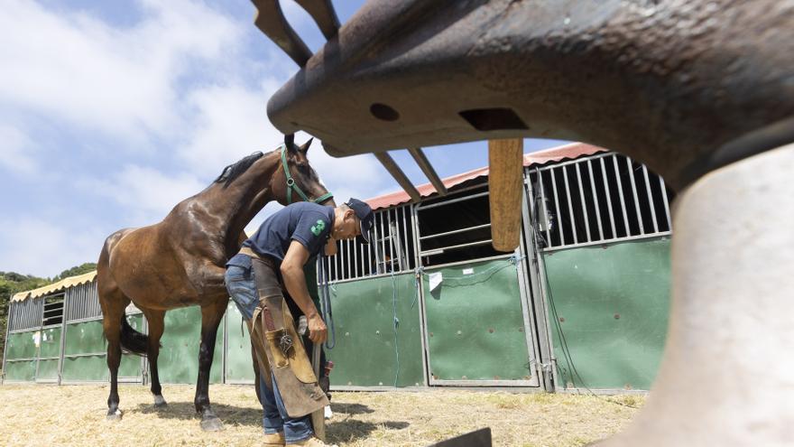 Zapateros de caballerías: así es el trabajo de un herrador
