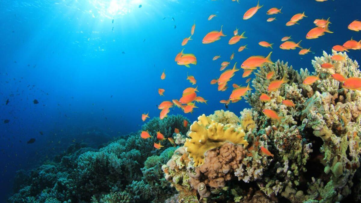 Descubren que los microplásticos también invaden el océano profundo