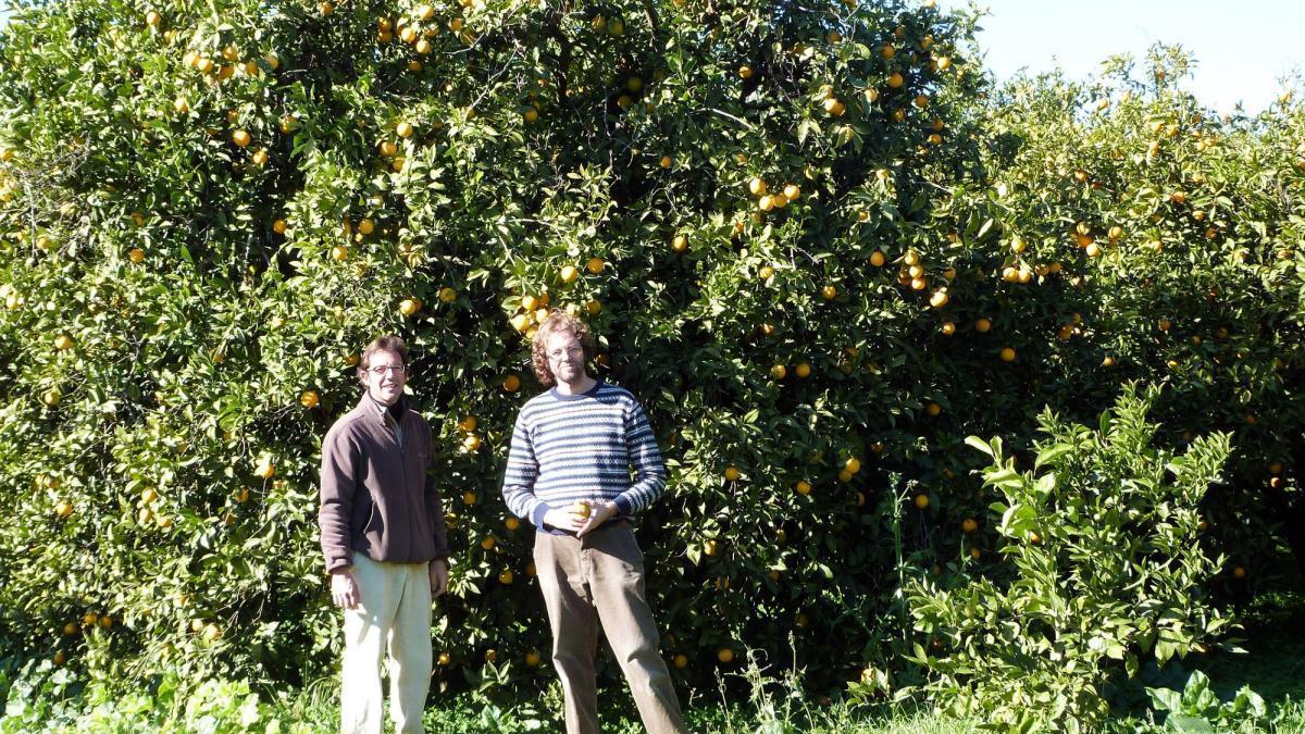 Los cítricos ecológicos de Palma del Río experimentan una fuerte demanda
