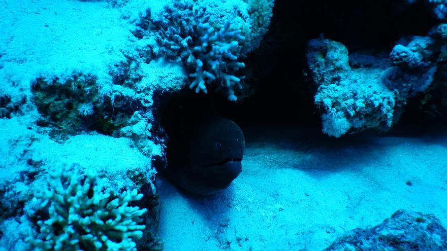 Los peces ultra negros del fondo marino, casi invisibles