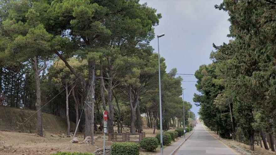 Figueres crea un «Bosc d'estornells» per treure'ls fora