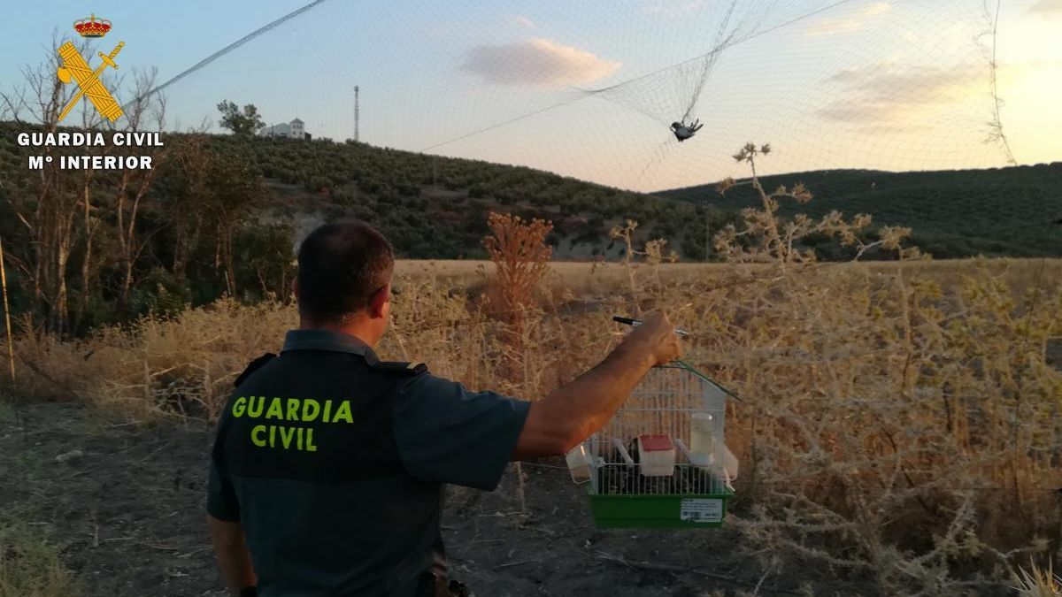 Descubren en Lucena a un cazador de aves protegidas con redes invisibles