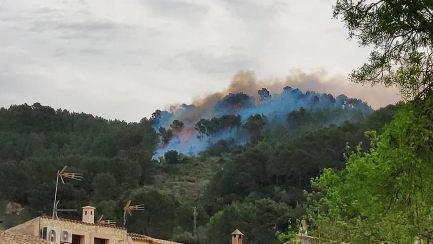 Controlado un incendio forestal en Esporles