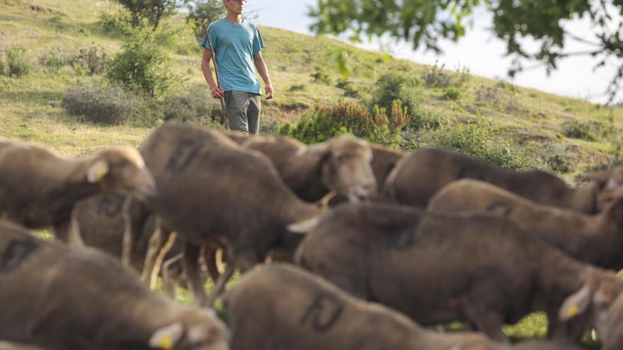 """Pablo Díaz, becario de pastor: """"No diferenciar una cabra de una oveja me parece preocupante"""""""
