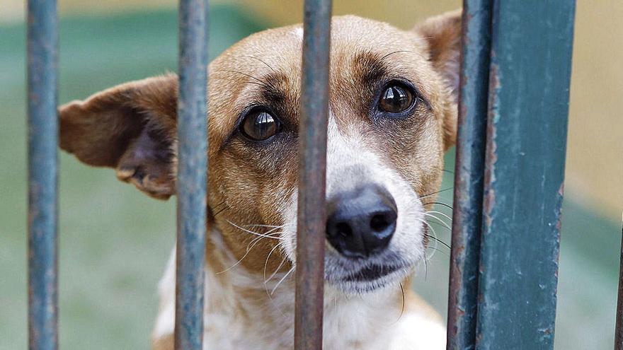 Corona bremst Tierschutz auf Mallorca aus