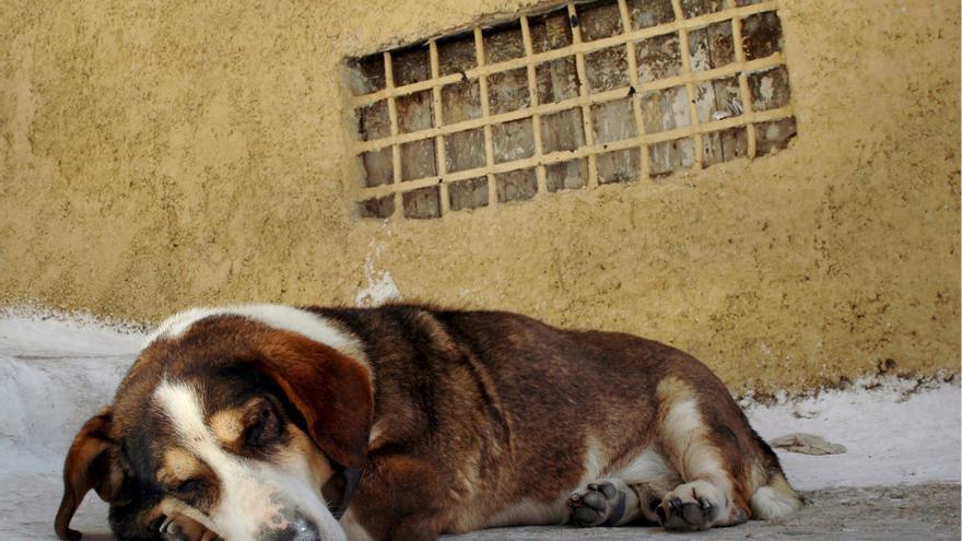 La Policía Local de Elche localiza el mayor criadero ilegal de perros de raza en la ciudad