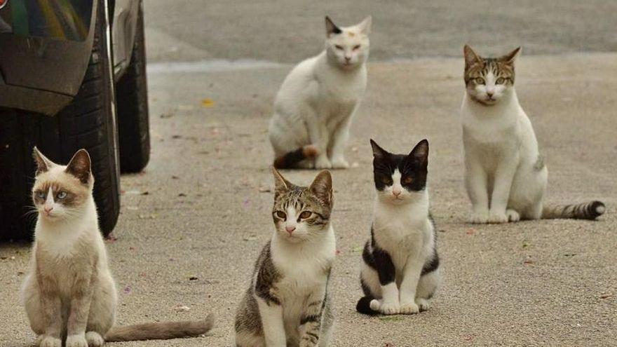 Pla pilot a deu pobles de l'Alt Empordà pel control de gats