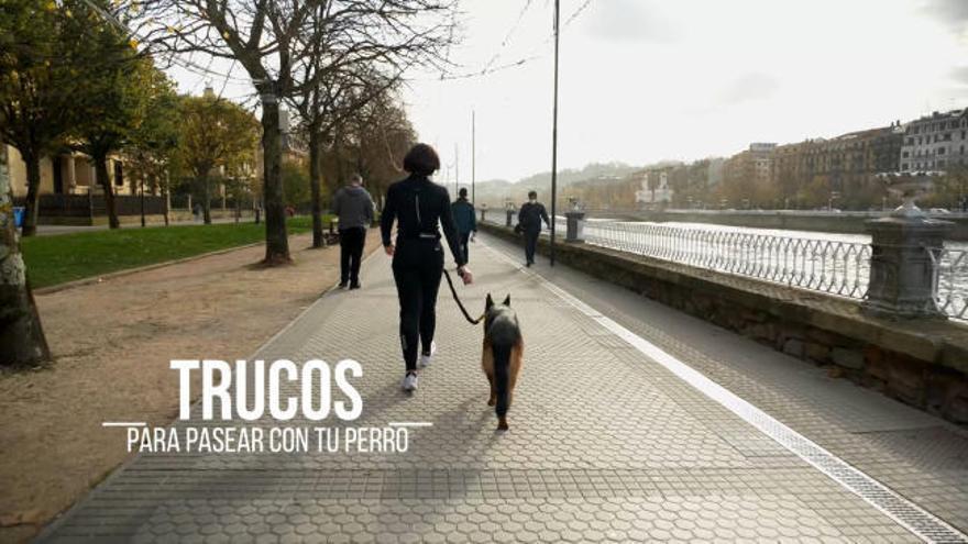 Vida Equilibrium | Capítulo 3: Trucos para pasear con tu perro
