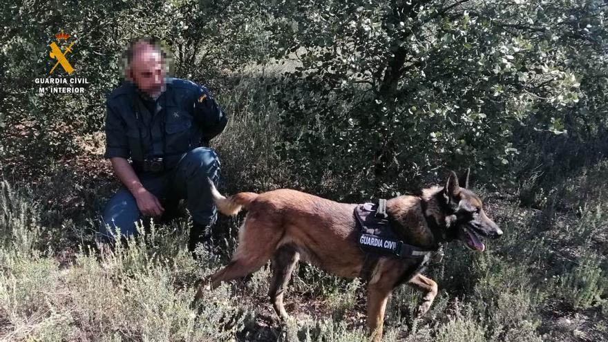 La Guardia Civil busca cebos envenenados en Tardobispo