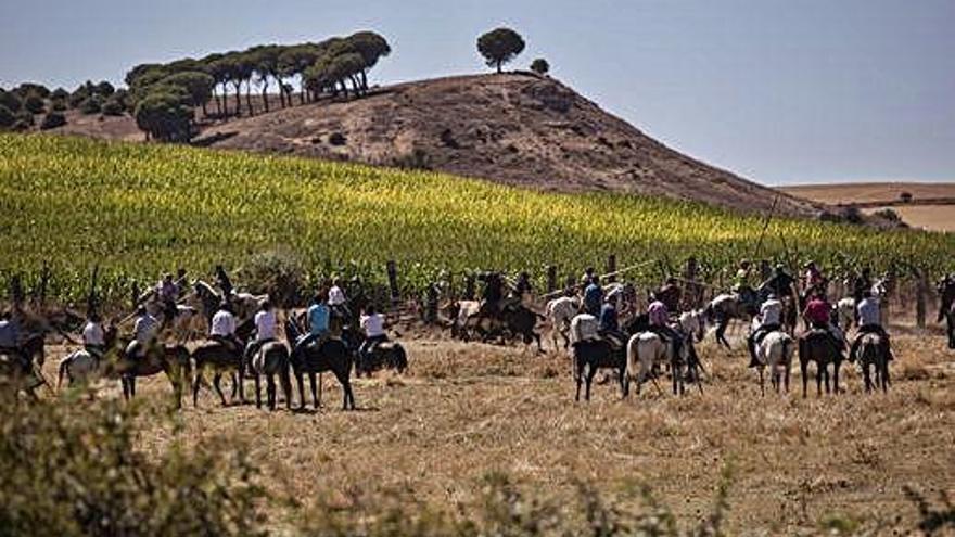 Los caballistas conducen a la manada de bueyes y toros, y a las derecha los aficionados observan el encierro desde la carretera.