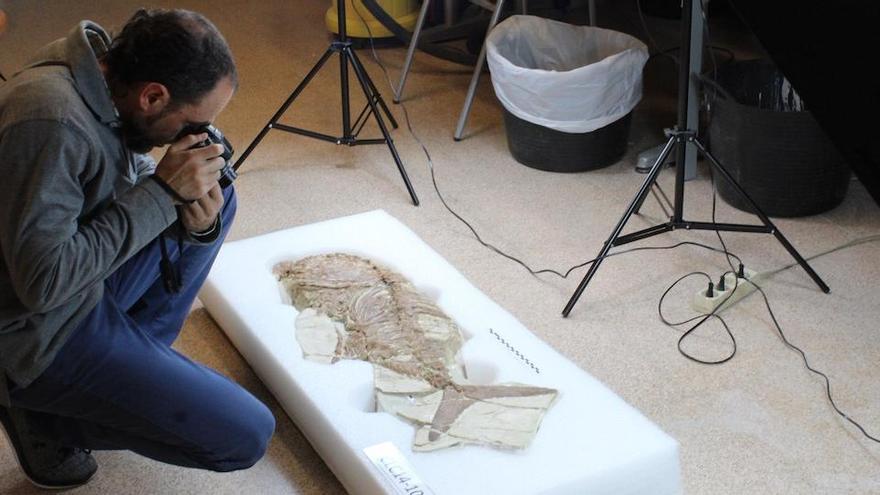 El MUPE identifica en Lorca un pez fósil del mioceno superior