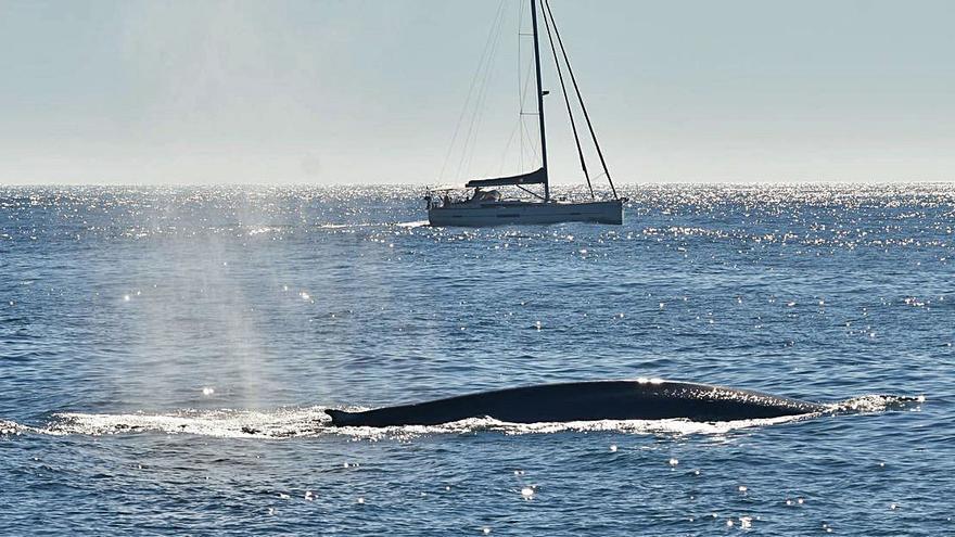 Más ballenas que en cuarenta años