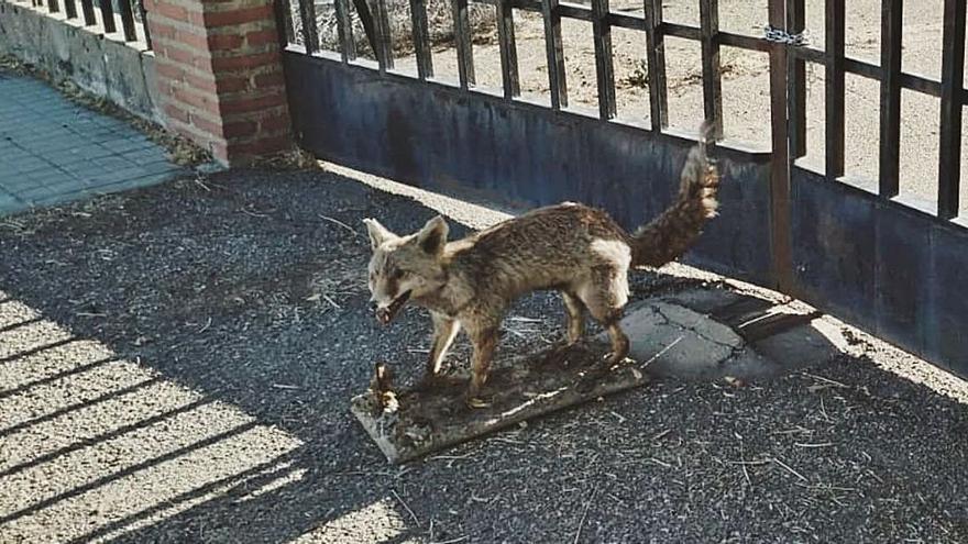 Aparece un animal disecado en el centro de mascotas de Toro