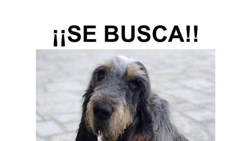 Cadeliños pide ayuda para recuperar a la gata Monchita y al perro Seis, dos mascotas rescatadas que faltan de sus hogares