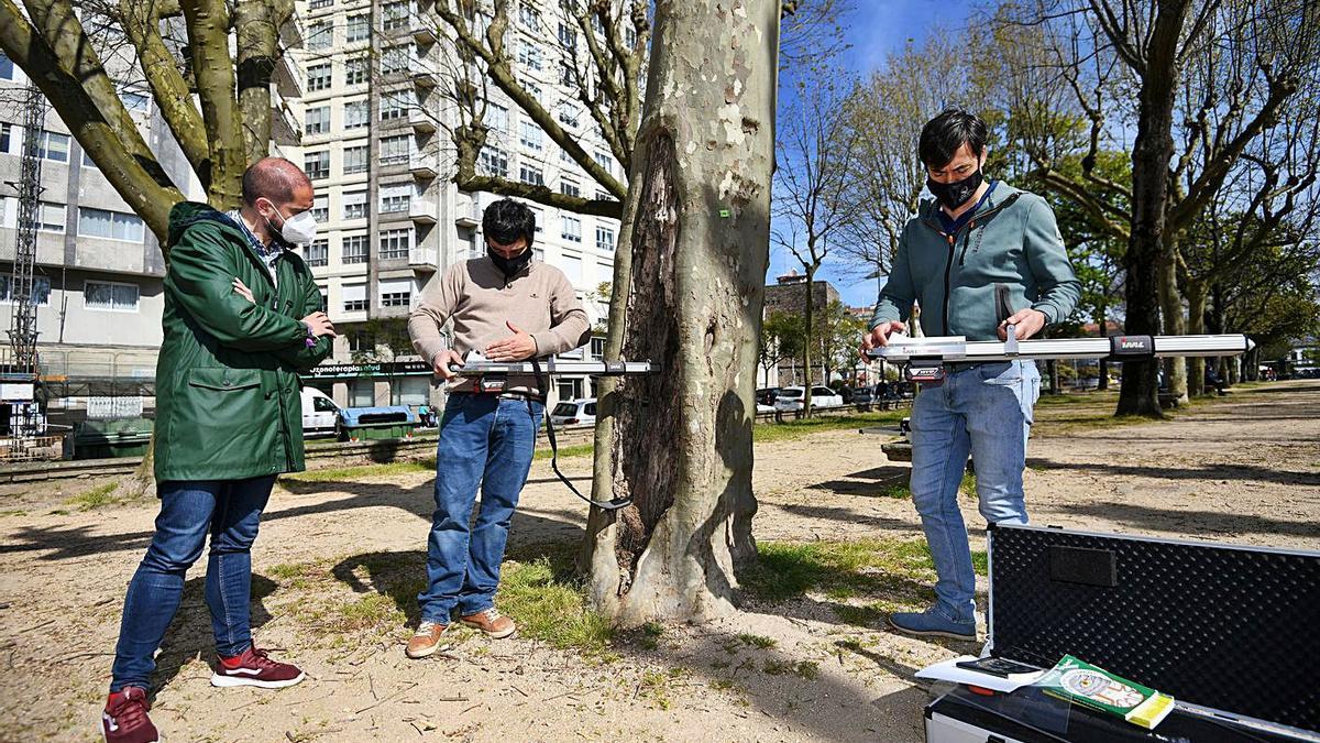 Los expertos realizan pruebas en un árbol en presencia del concejal Iván Puentes. |   // G. SANTOS