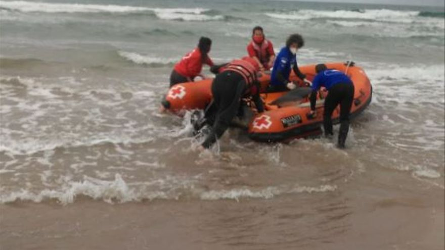 Un delfín es devuelto al mar tras quedar varado en la playa Norte de Gandia