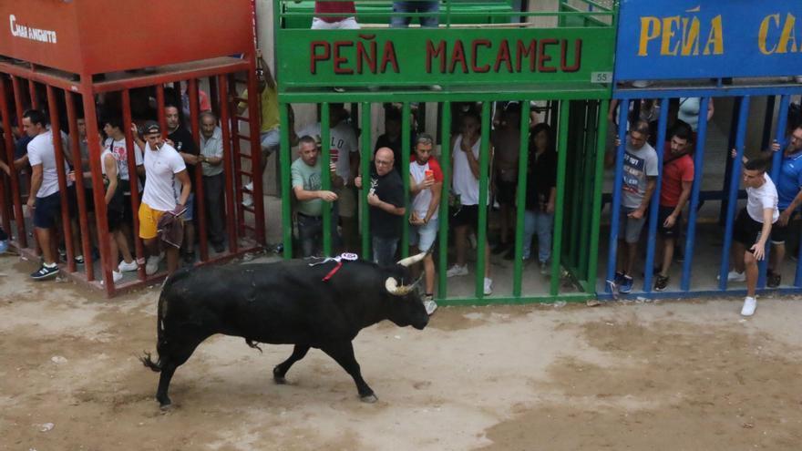 Las peñas de 11 municipios de Castellón están dispuestas a organizar bous en las calles en octubre