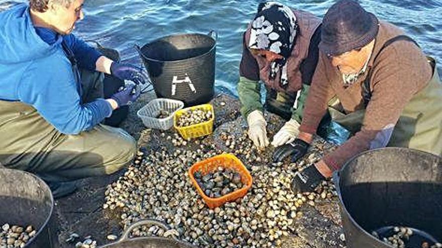 El sello Berberecho de Noia cumple su primer año con 200 toneladas vendidas