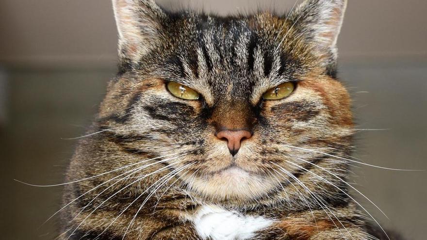 Los 5 errores que cometen los dueños de gatos y no lo saben