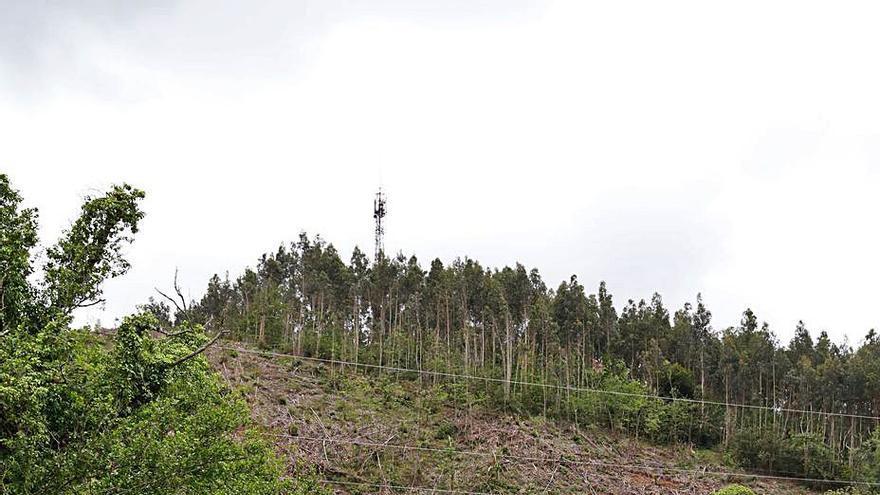 """""""La tala ilegal en el Ventorrillo afectó al Camino de Santiago"""", advierten los vecinos"""