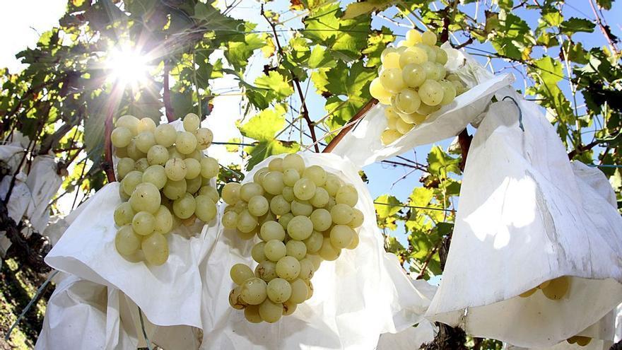 La distancia entre la uva y el vino