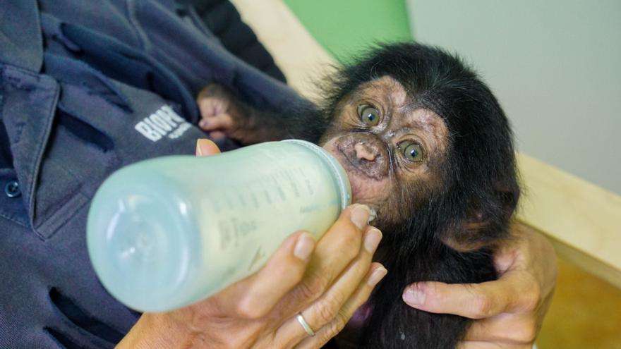 2020, un año de entrega al bienestar animal en Bioparc