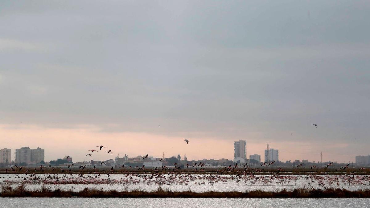 La mejora del aire por el confinamiento evitó 15 muertes en la Comunitat