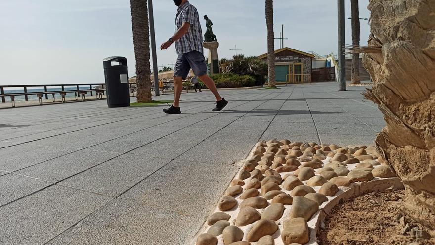 Torrevieja renueva todos los  alcorques del paseo marítimo