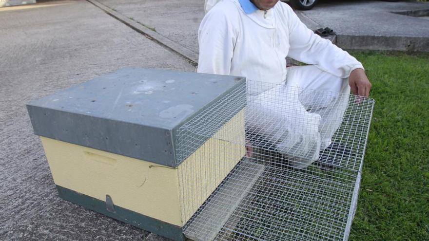 Redondela aborda las consecuencias de la propagación de la avispa asiática