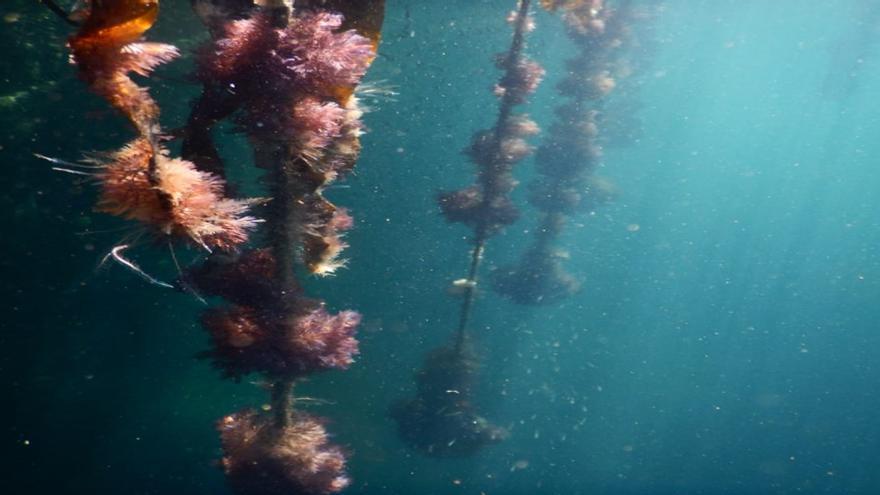 Una constelación de microarrecifes para mejorar la biodiversidad portuaria