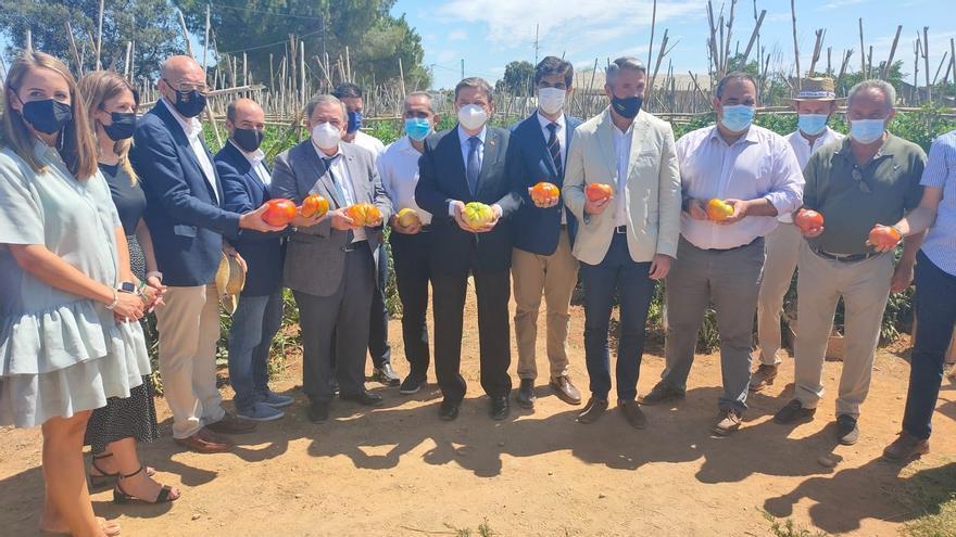 El ministro Planas visita una explotación de tomate autóctono del Valle del Guadalhorce