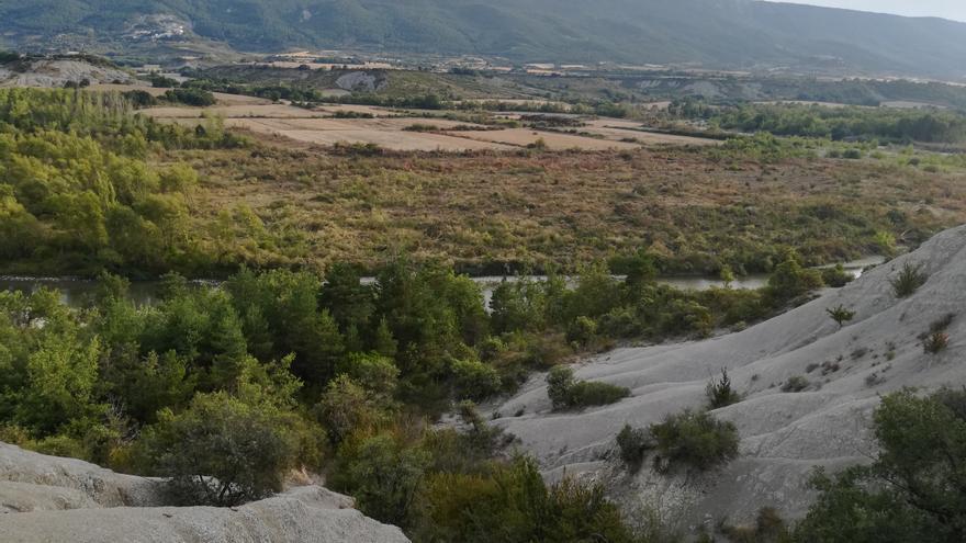 Río Aragón denuncia a la CHE por una tala de árboles en la cola del embalse de Yesa