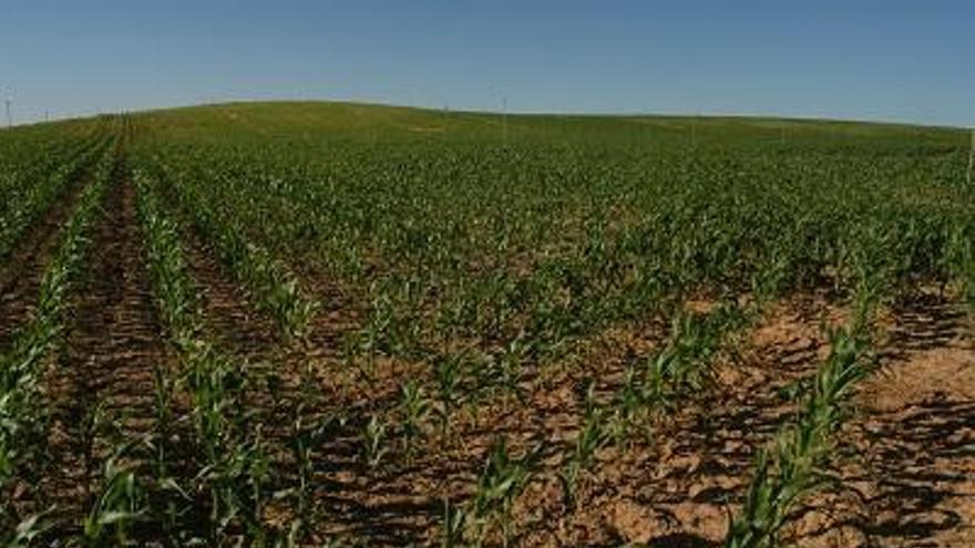 Agricultura pagarà 218 MEUR dels ajuts directes de la PAC 2019 abans del 6 de desembre