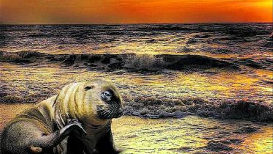 ¿Por qué miles de focas están abortando a sus crías?
