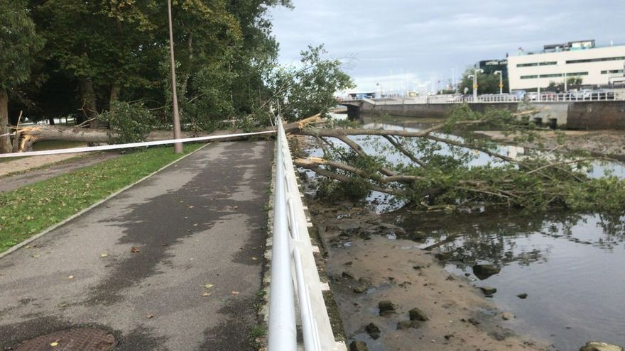 Un árbol se desploma sobre el Piles y daña parte del paseo