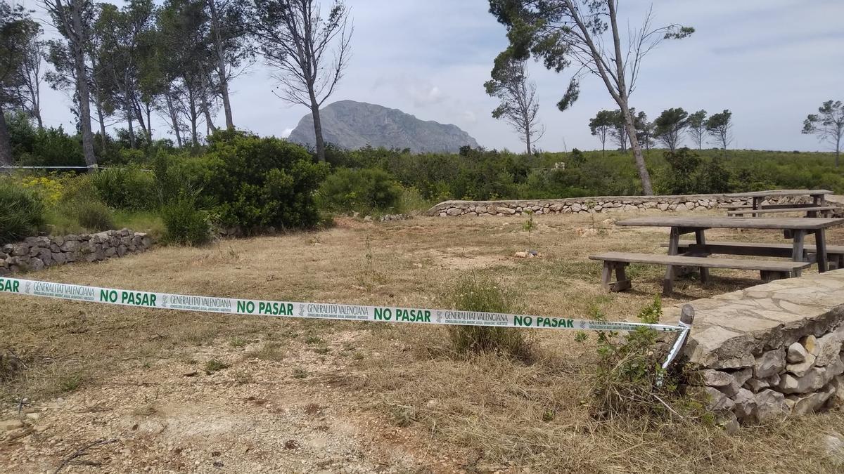 El enjambre ha sido detectado en el área recreativa de la zona de Les Planes, en Xàbia
