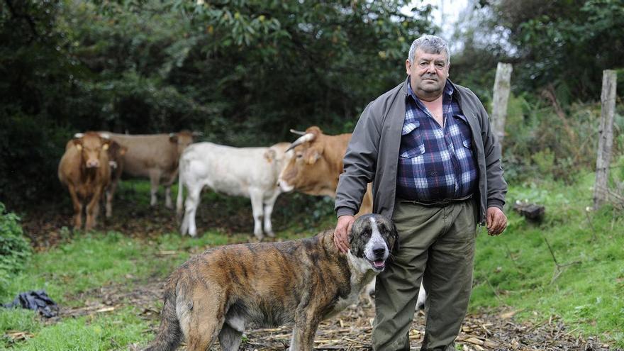 """Multas de hasta 30.000 euros a los ganaderos que no """"jubilen"""" a sus mastines para que descansen"""