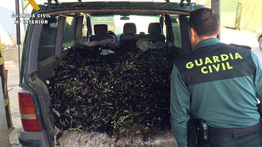 La Guardia Civil interviene nueve toneladas de aceitunas en Adamuz