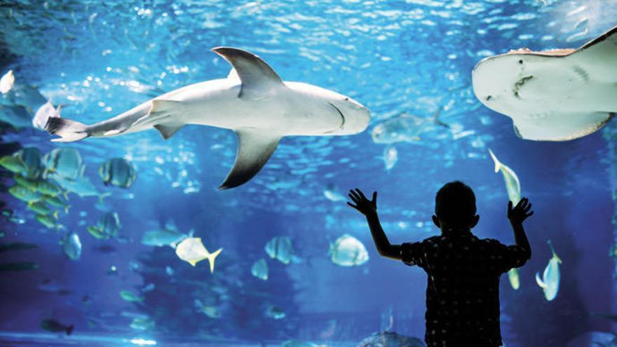 Los acuarios más espectaculares que puedes visitar en España