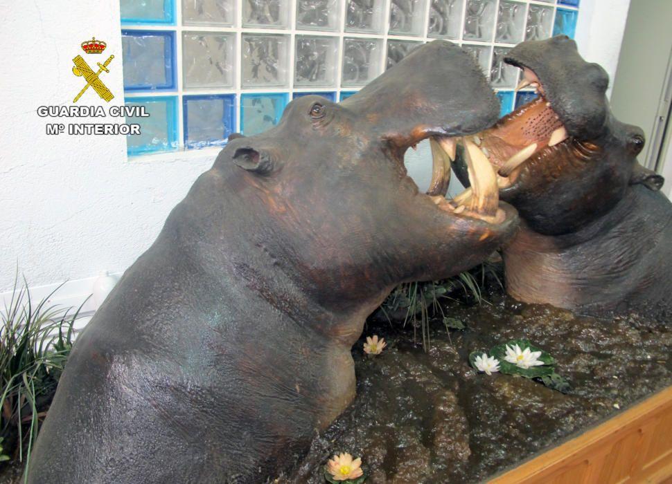 Animales disecados incautados por la policía