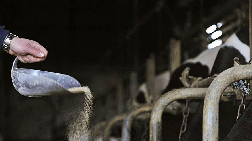 El sector lácteo denunciará a la industria si este mes no ajusta el precio al coste de producción
