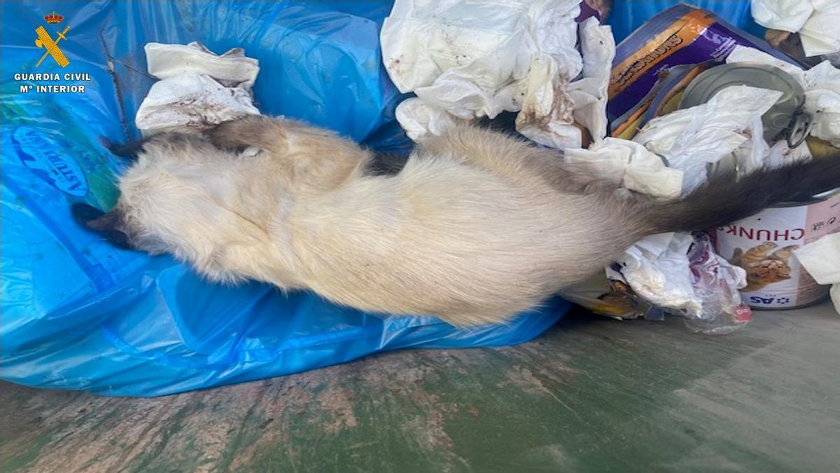 Foto del gato fallecido tras sufrir maltrato