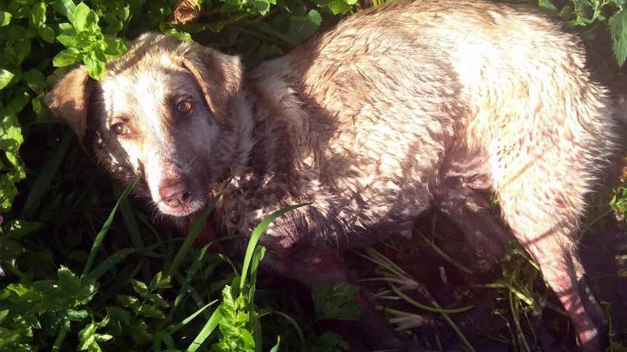 """El hombre que disparó a una perra en Lugo alega que era """"un peligro"""" para los coches"""