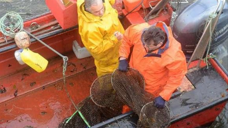 Los valeiros confirman el masivo regreso de lamprea al río Ulla gracias al buen tiempo