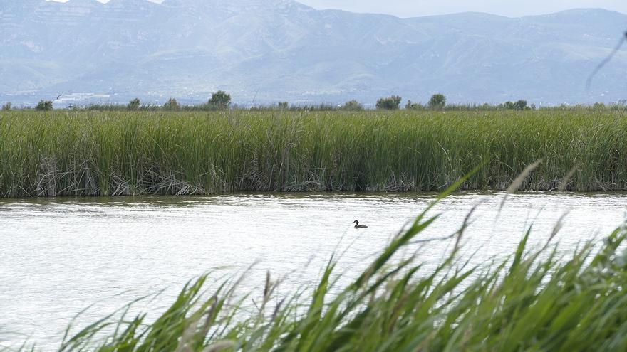 Objectiu per a la pròxima dècada: preservar els ecosistemes