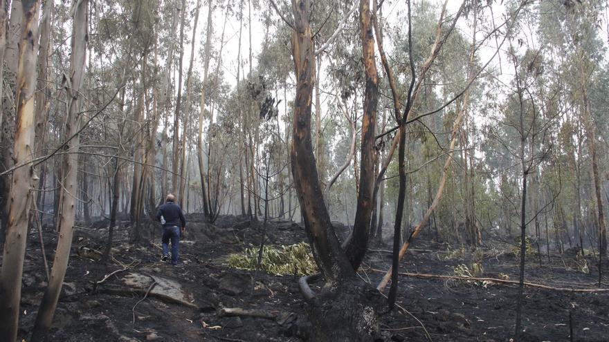 Los bosques gallegos suspenden en calidad medioambiental