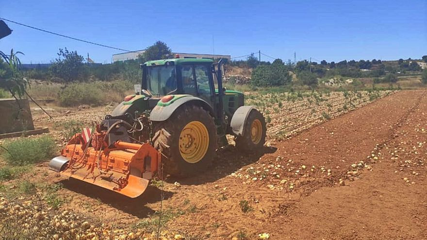 Los agricultores destruyen patatas y cebollas ante las importaciones masivas