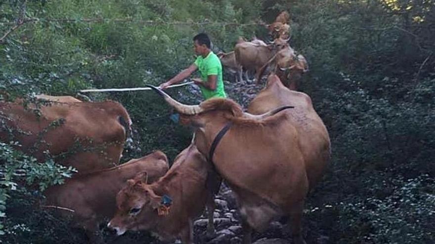 Los ganaderos arreglarán en sextaferia la calzada romana de Caoru, en Cabrales