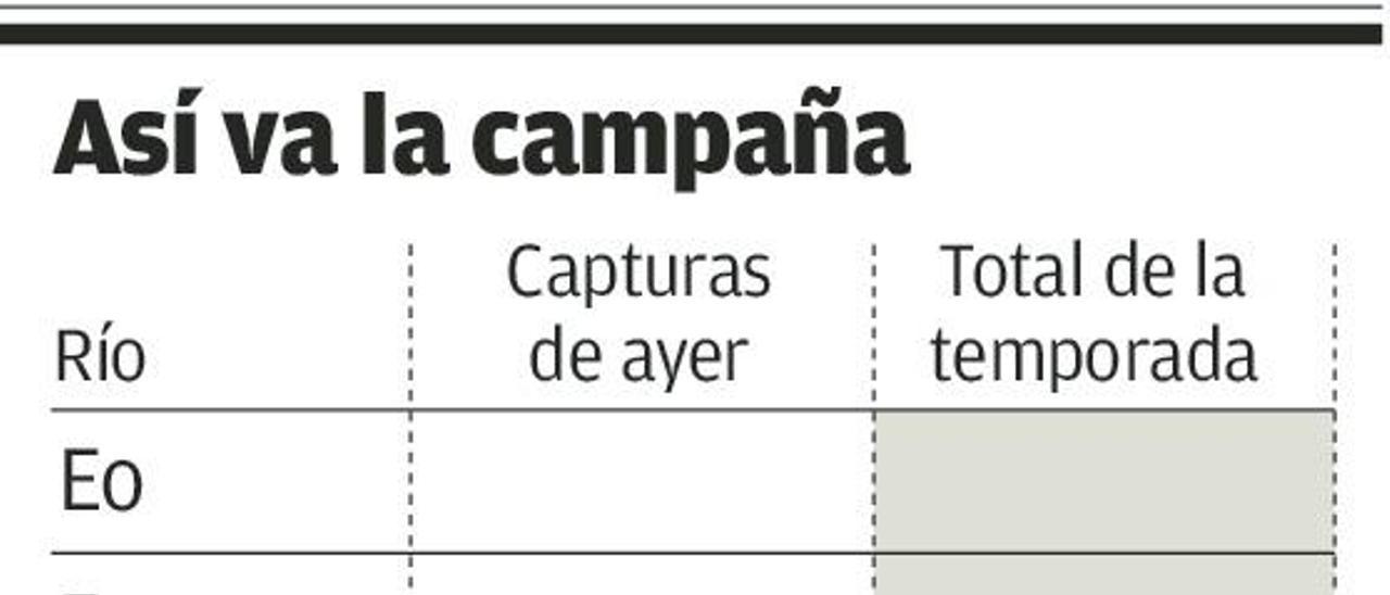 Los ríos asturianos llegan a las 550 capturas con las 15 de ayer