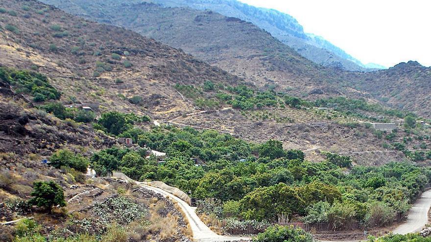 La ola de calor reduce la producción agrícola de aguacates y frutales